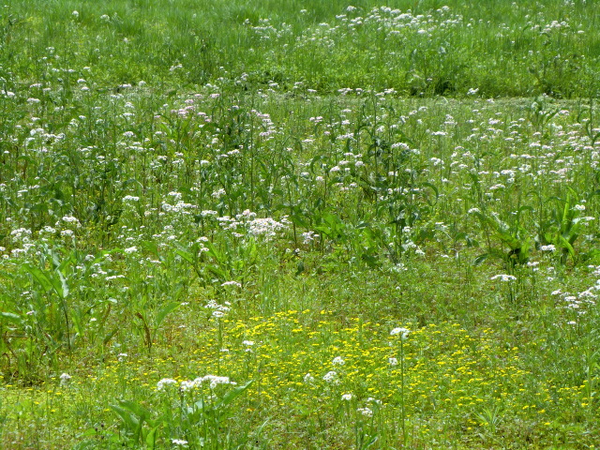 Atarashiki Mura May8 2012 (1)_00001.jpg